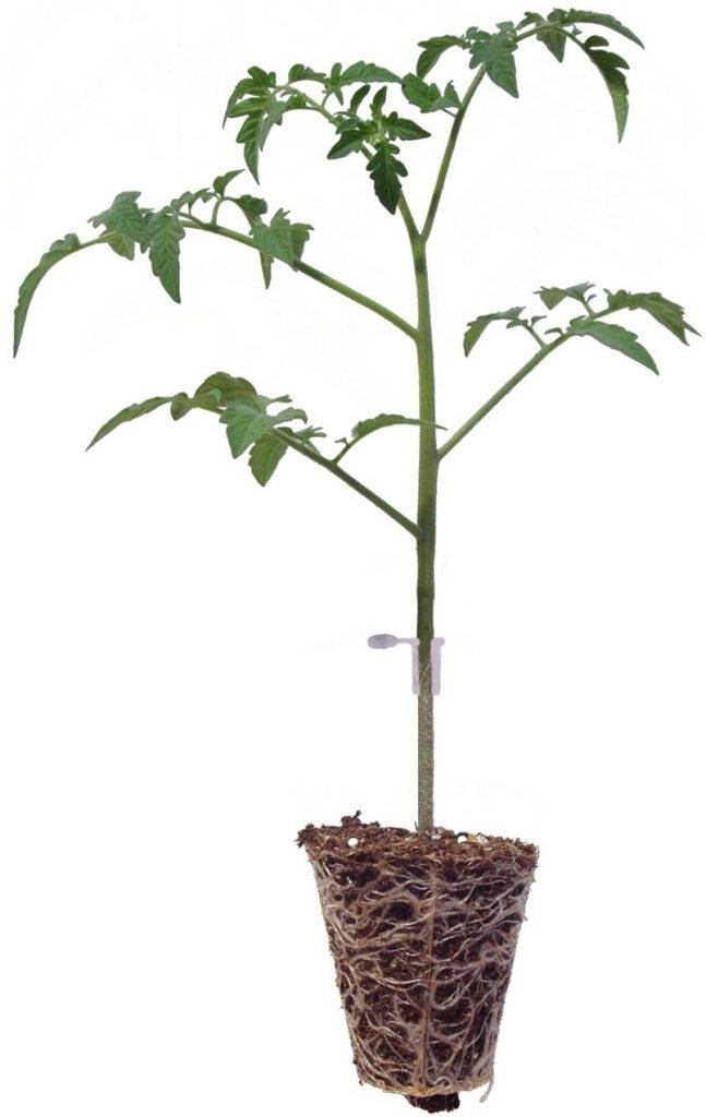 Ekološke sadike za vaš vrt